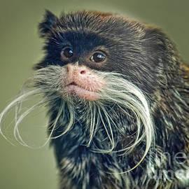 Mustached Monkey Emperor Tamarin II  by Jim Fitzpatrick