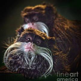 Jim Fitzpatrick - Mustached Monkeys Emperor Tamarins