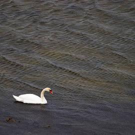 Jouko Lehto - Mute Swan 1