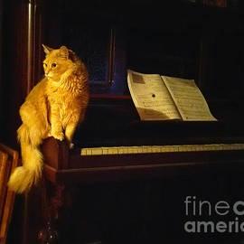 My Cat Mozart by Broken Soldier