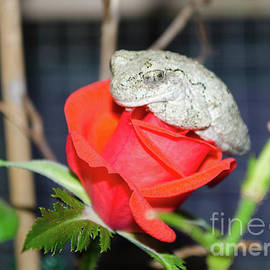 Donna Brown - The Frog And Rose