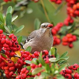My Red Berry by Linda Brody