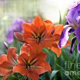 Karry Degruise - My Secret Garden
