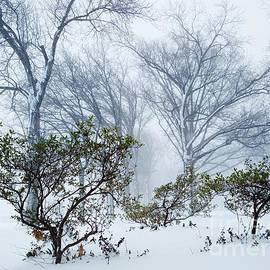 Mioara Andritoiu - My Winter Love