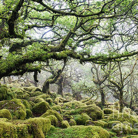 Mysterious Ancient Woodland by Tim Gainey