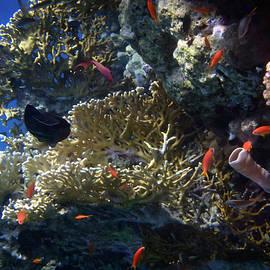 Johanna Hurmerinta - Mysterious Red Sea World 7