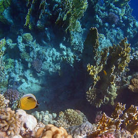 Mysterious Red Sea World