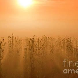 Mystic foggy sunrise by Ognian Setchanov