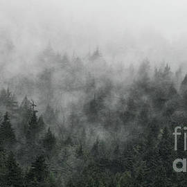 Brad Allen Fine Art - Mystic Forest V