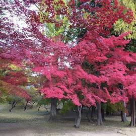 Chieko Kobayashi - #上田城址公園 #赤が映えます