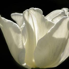 Olimpia Negura - Tulip