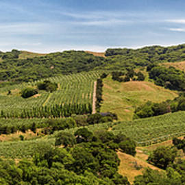 Napa Valley California Panoramic by Adam Romanowicz