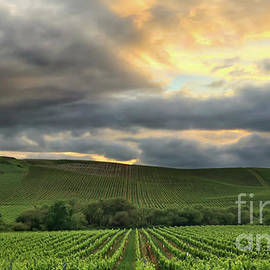Leslie Wells - Napa Vineyard Sunset