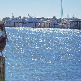 Naples Pelican by Lars Lentz