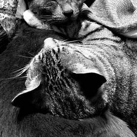 Napping by Beverly Elliott