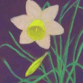 Narcissus Hello by Anne Katzeff