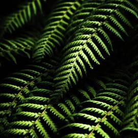 Jorgo Photography - Wall Art Gallery - Nature in minimalism