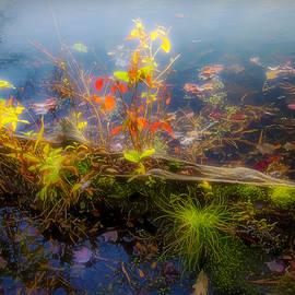 Brian Wallace - Nature Log