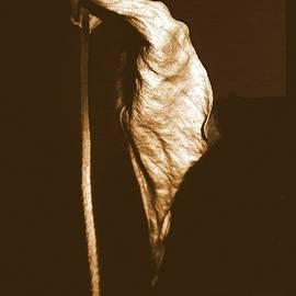 Nature Morte by VIVA Anderson