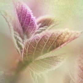 Elvira Pinkhas - Nature Of Fractals