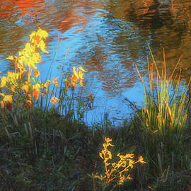 Natures Abstracts  by Ola Allen
