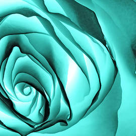 Prairie Pics Photography - UltraViolet Rose