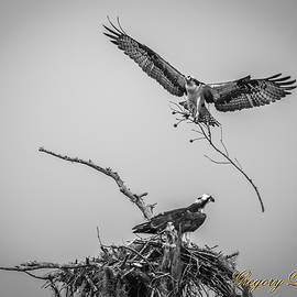 Nest Building 2m by Gregory Daley  MPSA