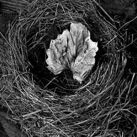 Lesa Fine -  Nest in Time Black and White