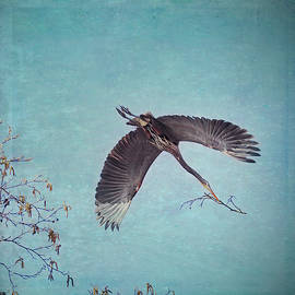 Peggy Collins - Nesting Heron in Flight