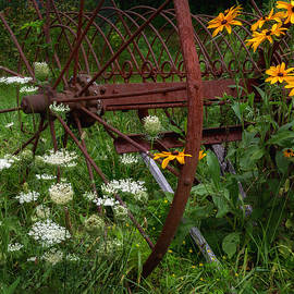 New England Summer Wild Flowers by Bill Wakeley