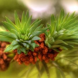 New Growth by Linda Covino