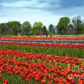 Regina Geoghan - New Jersey Tulip Festival Landscape