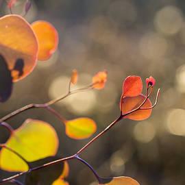 New Leaves 2 by Linda Lees
