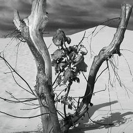 New Life between Dead Tree Branches by Randall Nyhof