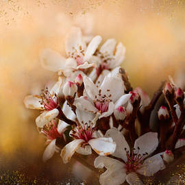 Jai Johnson - New Spring Blooms