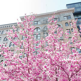 New York in the Springtime - Vivienne Gucwa