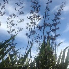 New Zealand Flax  by By Divine Light