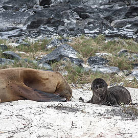 Newborn Sea Lion and Tired Mom
