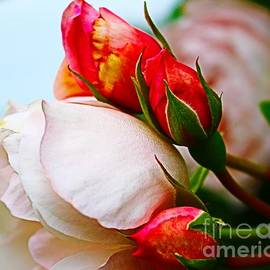 Rose Hug by Loretta S