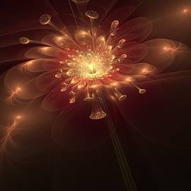 Night Bloom by Svetlana Nikolova