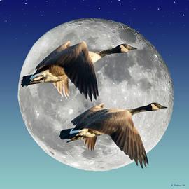 Brian Wallace - Night Flight