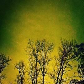Brenda Plyer - Nightglow - yellow