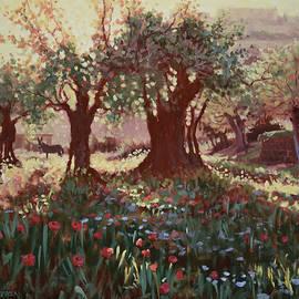 Nimrods Castle, Northern Galilee, Israel by Graham Braddock