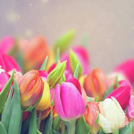 Anastasy Yarmolovich - Tulips in my Garden