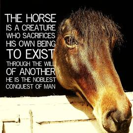 Noble Morgan Stallion Quote by JAMART Photography
