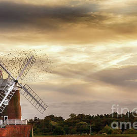 Simon Bratt Photography LRPS - Norfolk windmill with flock of birds at sunset