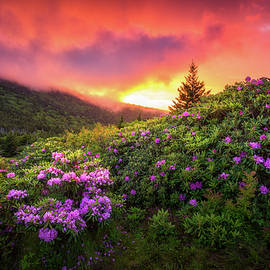 North Carolina Mountains Outdoors Landscape Appalachian Trail Spring Flowers Sunset by Dave Allen