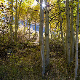 North Lake Aspens by Kim Hawkins Eastern Sierra Gallery