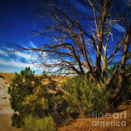 Chuck Caramella - Northern Arizona Desert ...