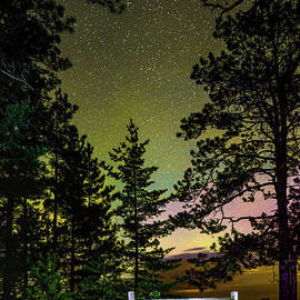 Norris Seward - Northern Lights Big Pines -2022